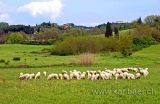Toscana (0302)