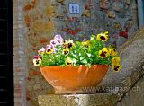 Blumen / Flowers (04388)