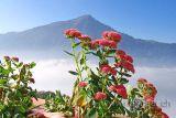 Blumen mit Rigi (66816)