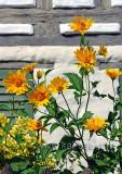 Blumen (82177)
