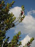 Le buisson Croy vers le ciel