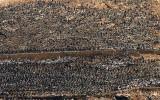 Lots of birds, Ballestas Islands