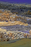 Jatiluwih rice terraces.