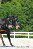 if only i could get their ears in step! john henry on the off side with agnes de mule