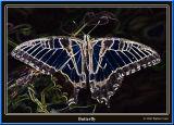 Butterfly9-06 5-01.jpg