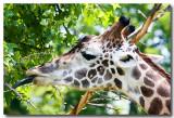 Wildlife 8