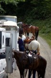 Horses, trailers, wrangler and DNR manager Julie getting ready