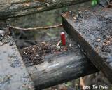 IMG_1744a.jpg Rotted bridge stringer
