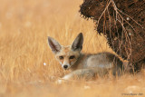 Fox 0420