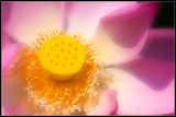 _ADR7190-1 lotus IO.jpg