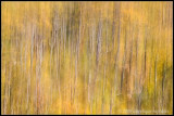 _MG_0280 trees rewf.jpg