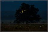_ADR9835 firefly tree ewf.jpg