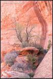 _ADR7348 canyon cwf.jpg