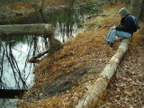 2009 11-1 Honey Brook(21) Beaver haul out site.JPG