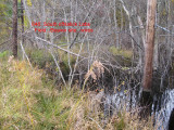 646.Beaver site.loose.wires.jpg