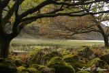 Llyn Cwm Bychan 1.jpg