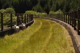 Cwm Prysor Railway Walk