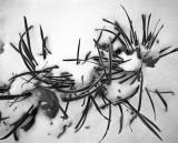 Grasses in snow, 2007.jpg