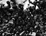 Firewood in snow.jpg