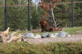 Sam is their biggest bear at 1000 lbs!