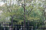 Washington Square Village Playground & Garden