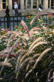 Grass & Milkweed at NYU Sports Center Garden