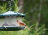 Cardinal - Grand Park Residential Community
