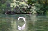 Egret - Rainbow River Boat Ride