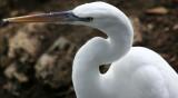 Egret - Wildlife State Park