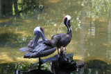 Pelicans - Wildlife State Park
