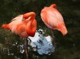 Flamingos - Wildlife State Park