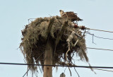 Osprey Nest - Resort Area