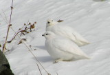 snowbirds_in_autumn