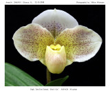 20085935 -   Paph. Toot Toot Tootsie 'Don't Cry' AM/AOS 82 pts.