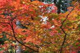 Autumn colors in Odaesan