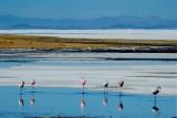 Salar de Uyuni Flamingos