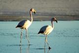 Flamingos on the Salar de Uyuni