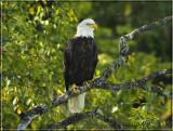 eagle framed.jpg