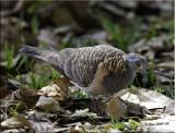 Birds of Australia 2009