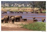 Eléphants à Samburu
