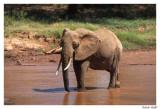 Elephant Samburu