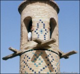Photographer Unknown:Iran