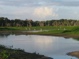 Daybreak in Alligator Hole