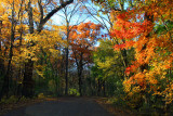 Deer Grove Forest Preserve, Palatine, IL - Fall colors - An autumn drive