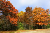 Deer Grove Forest Preserve, Palatine, IL - Fall colors - Shades of brown