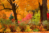 Fall Colors, Illionis - Autumn in Palatine, Wood St