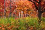 Fall Colors, Illinois - Morton Arboretum - East Loop Trail