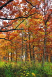 Morton Arboretum - Wooded paradise