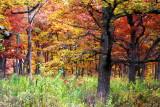 Morton Arboretum - East Loop Trail
