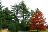 Morton Arboretum - Conifer Trail